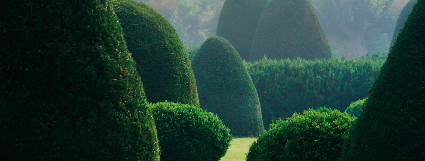 Mature Hedging and Topiary