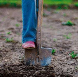 Hedging ground preparation