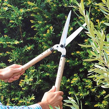 Hedging pruning